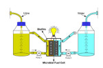 Urine fuel cells